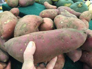 sladki krompir kmetovanje