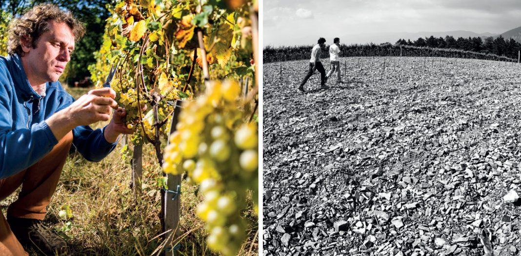 Kdo so najboljši slovenski vinarji